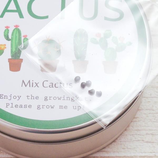 サボテン 種 リトルガーデン サボテン栽培キット缶 MIX CACTUS ミックス カクタス|hana-kazaru|04