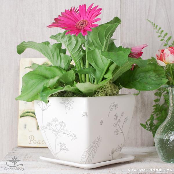 プランター おしゃれ 植木鉢 植物柄のスクエアプランター 約4.5号 受け皿付|hana-kazaru