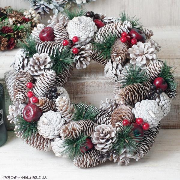 クリスマスリース 松ぼっくりと真っ赤な林檎のホワイトクリスマスリース 直径約34cm hana-kazaru