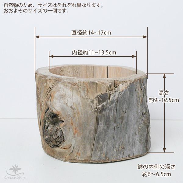 プランター おしゃれ 植木鉢 木製 流木フラワーポット 縦 BIG hana-kazaru 08
