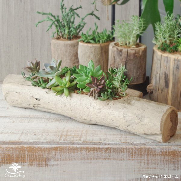 プランター おしゃれ 植木鉢 木製 流木フラワーポット 横長ロング|hana-kazaru