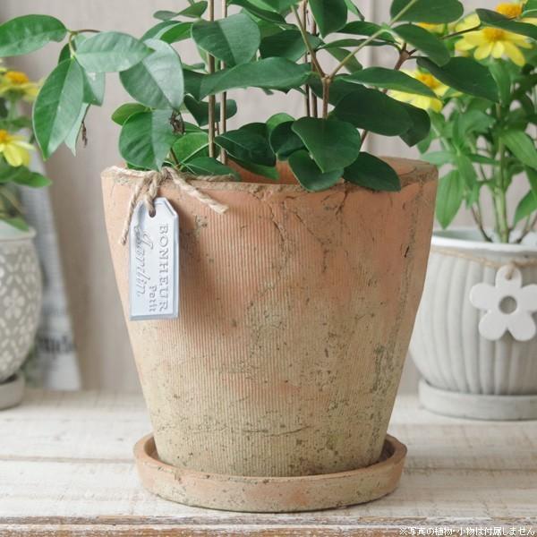 プランター おしゃれ 植木鉢 陶器 モッシーラウンドポット 約5.5号|hana-kazaru