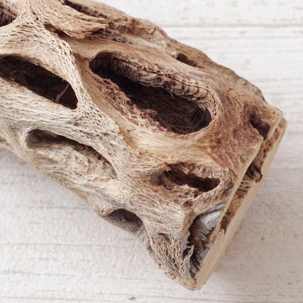 インテリア 木材 オブジェ プランツベース アレンジ資材 サボテンの骨 Sサイズ 約15cm|hana-kazaru|02