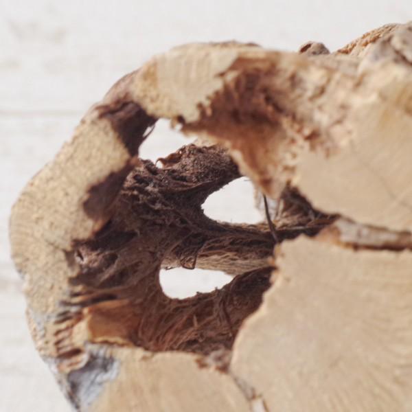 インテリア 木材 オブジェ プランツベース アレンジ資材 サボテンの骨 Sサイズ 約15cm|hana-kazaru|04