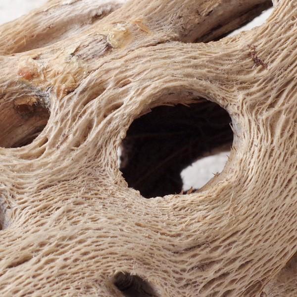 インテリア 木材 オブジェ プランツベース アレンジ資材 サボテンの骨 Sサイズ 約15cm|hana-kazaru|05