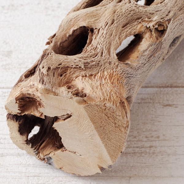 インテリア 木材 オブジェ プランツベース アレンジ資材 サボテンの骨 Sサイズ 約15cm|hana-kazaru|06