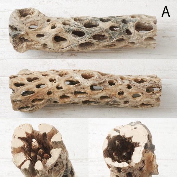 インテリア 木材 オブジェ プランツベース アレンジ資材 サボテンの骨 Mサイズ 約20cm|hana-kazaru|02