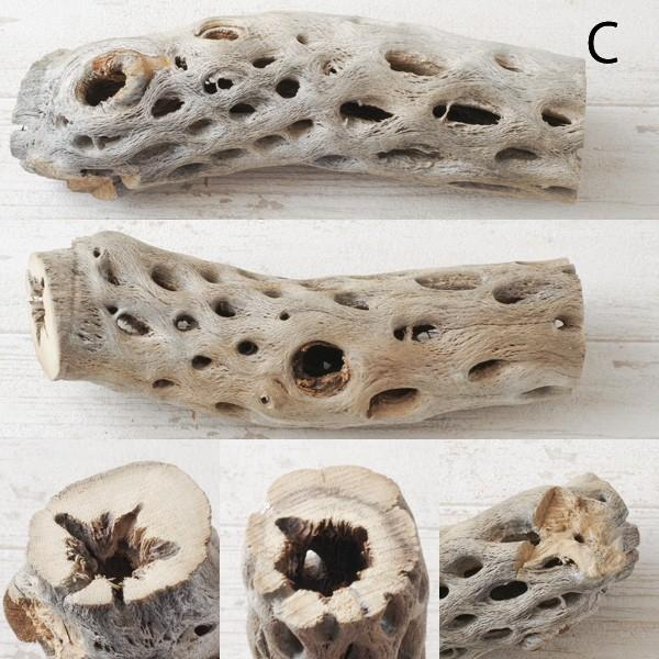 インテリア 木材 オブジェ プランツベース アレンジ資材 サボテンの骨 Mサイズ 約20cm|hana-kazaru|04
