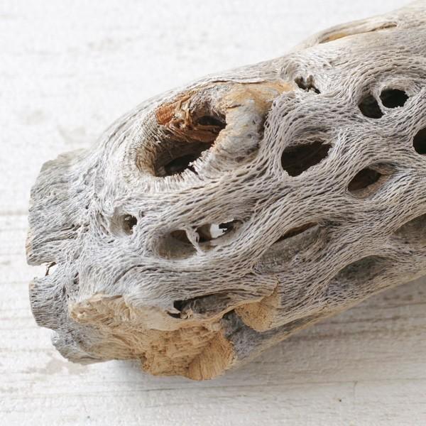 インテリア 木材 オブジェ プランツベース アレンジ資材 サボテンの骨 Mサイズ 約20cm|hana-kazaru|05