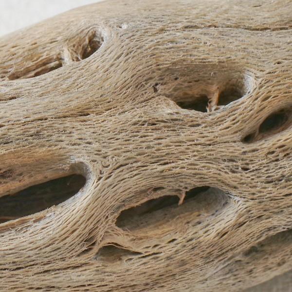 インテリア 木材 オブジェ プランツベース アレンジ資材 サボテンの骨 Mサイズ 約20cm|hana-kazaru|06