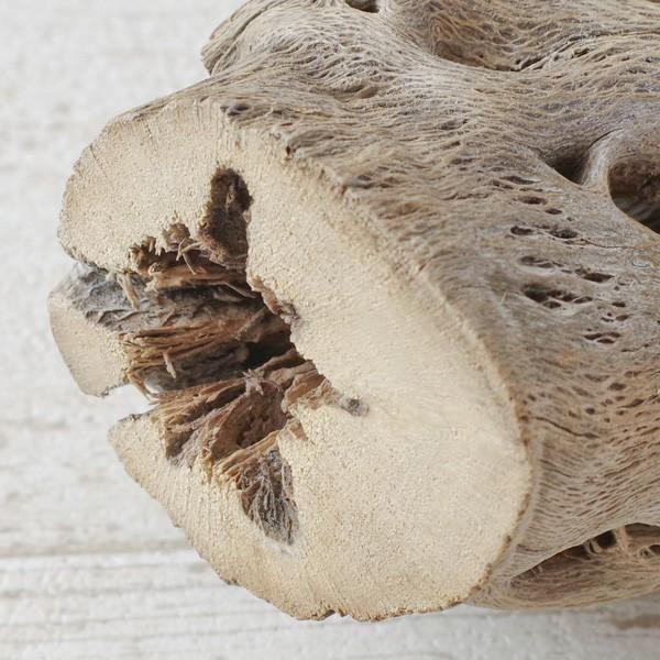 インテリア 木材 オブジェ プランツベース アレンジ資材 サボテンの骨 Mサイズ 約20cm|hana-kazaru|07