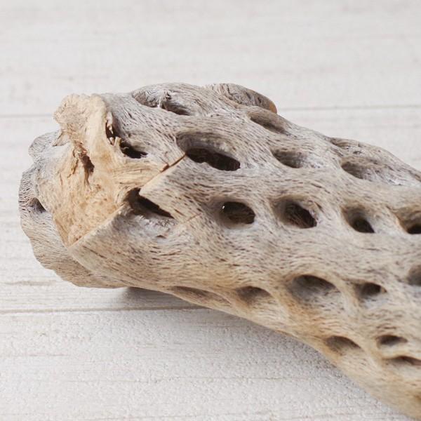 インテリア 木材 オブジェ プランツベース アレンジ資材 サボテンの骨 Mサイズ 約20cm|hana-kazaru|09