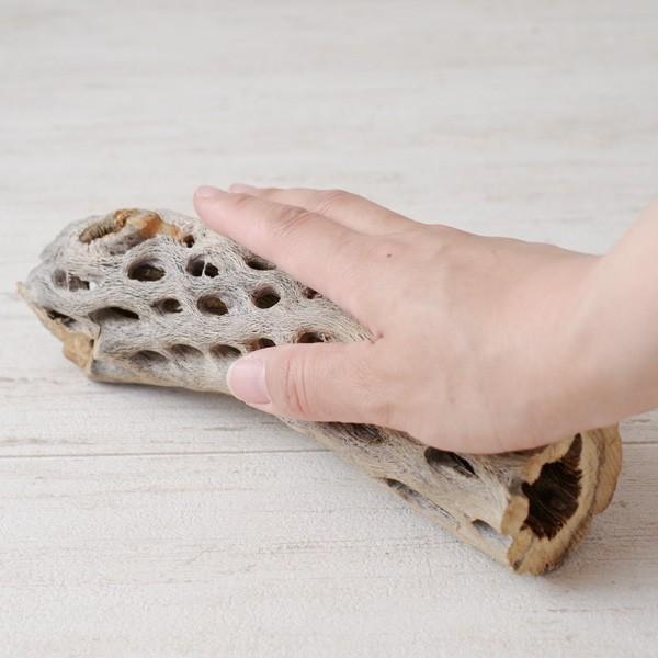 インテリア 木材 オブジェ プランツベース アレンジ資材 サボテンの骨 Mサイズ 約20cm|hana-kazaru|10