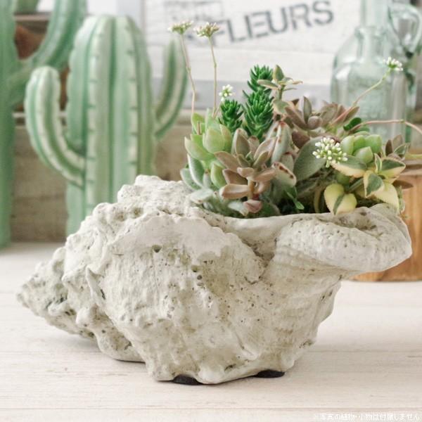 プランター おしゃれ 植木鉢 アンティーク風スパイラルシェルセメントポット|hana-kazaru