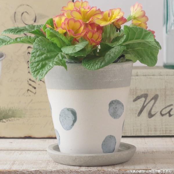 プランター おしゃれ 植木鉢 信楽焼 パロットポット水玉 白 約3号|hana-kazaru