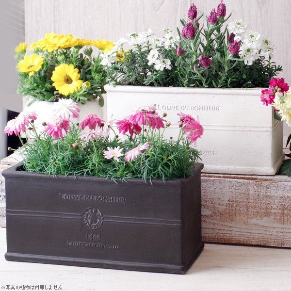 プランター おしゃれ 植木鉢 グラスファイバー製 ボヌールオリーブ・プランター 約W29×D12×H14cm|hana-kazaru