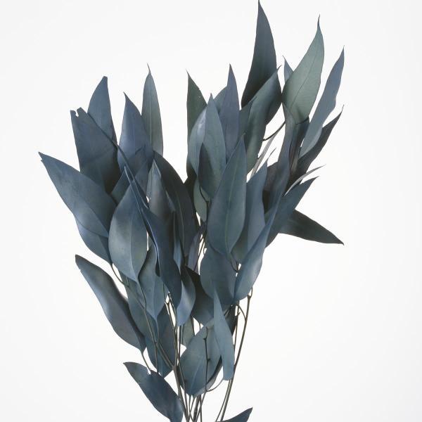 即日 ドライ 大地農園 ウィローユーカリ 35g ブルーグリーン 16100-760 ドライ葉物 葉物