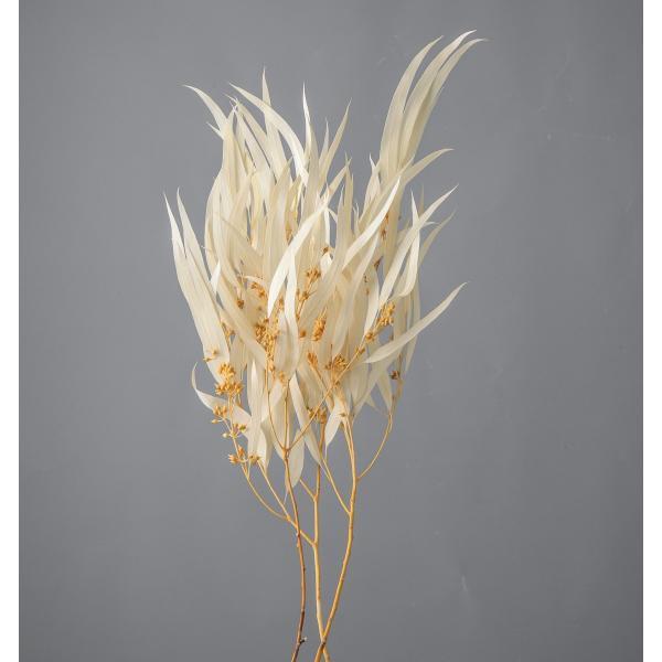 即日 ドライ 大地農園 ユーカリ エキゾチカ 葉付 約25g オフホワイト 40175-011 ドライ葉物 葉物