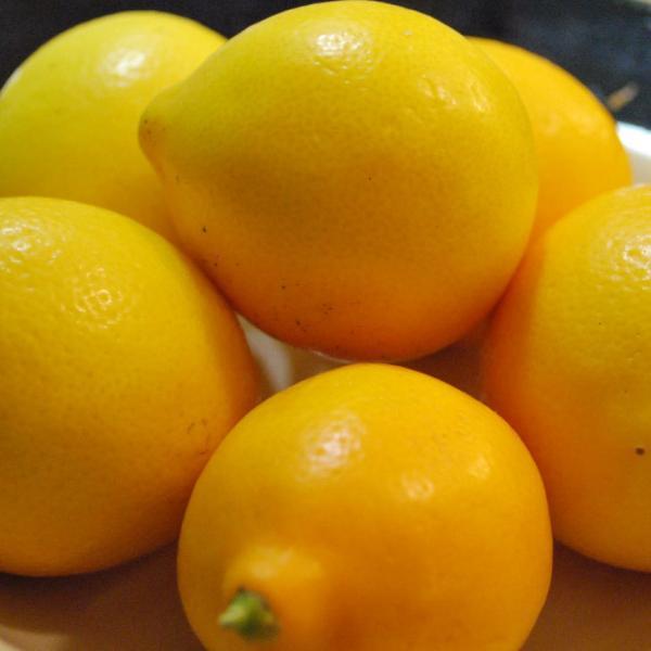  ◆送料無料◆ レモン 苗木 【マイヤーレモン】 3年生 接ぎ木 プラスチック鉢植え (ニーム小袋付…