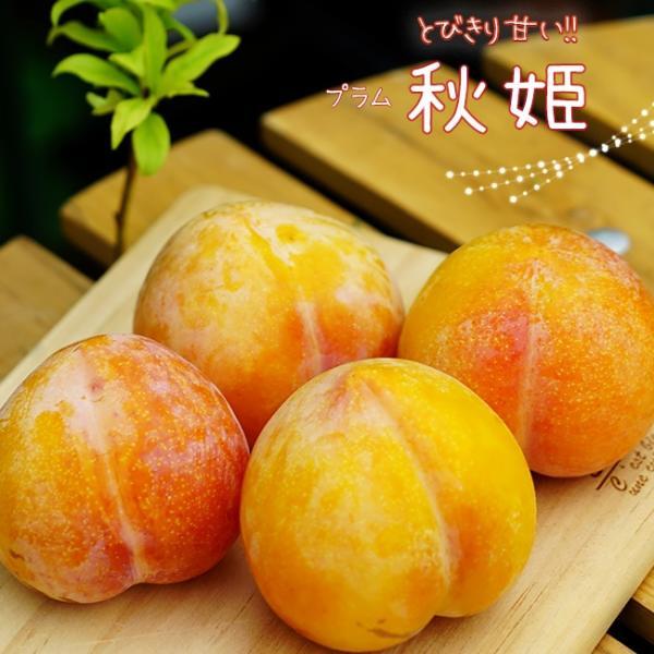 プラム・すもも 秋姫 2年生接木苗 スリット鉢植え  予約販売9〜10月頃入荷予定