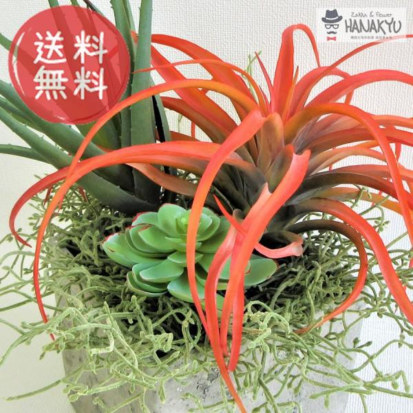多肉植物 寄せ植え アレンジ グリーンアート
