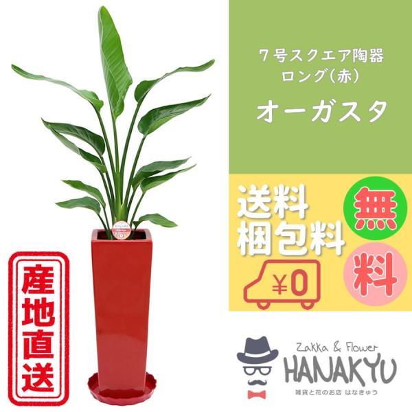 オーガスタ7号角陶器鉢ロング赤