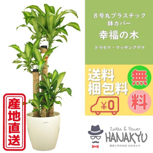 幸福の木8号プラスチック鉢カバー