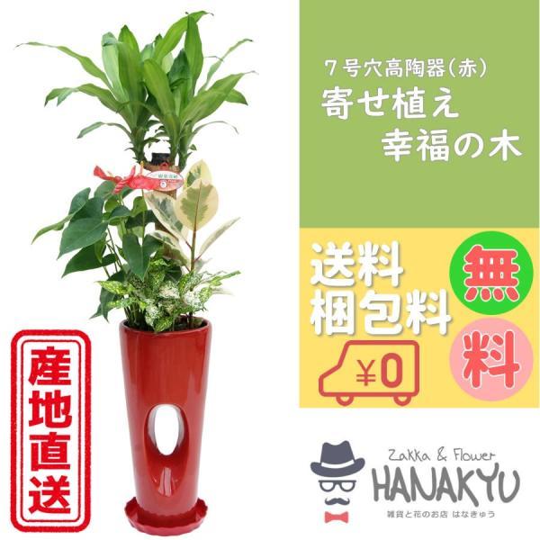 寄せ植え幸福の木7号穴あき高陶器赤