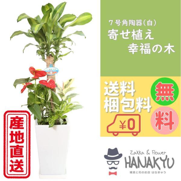寄せ植え幸福の木7号角陶器鉢白