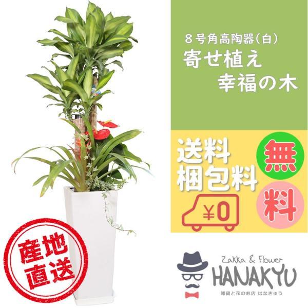 寄せ植え幸福の木8号角高陶器白