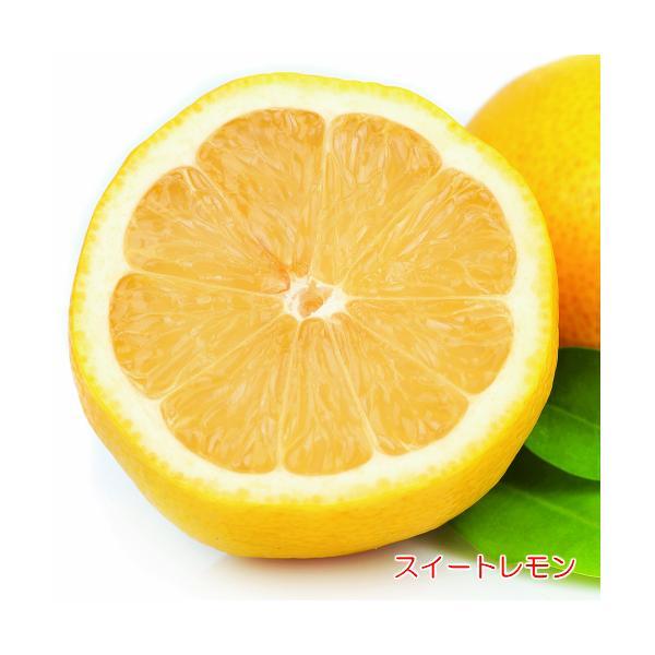 スイートレモン 果樹 苗木 4.5号 直径13.5cm ポット 常緑樹 柑橘系 鉢植え