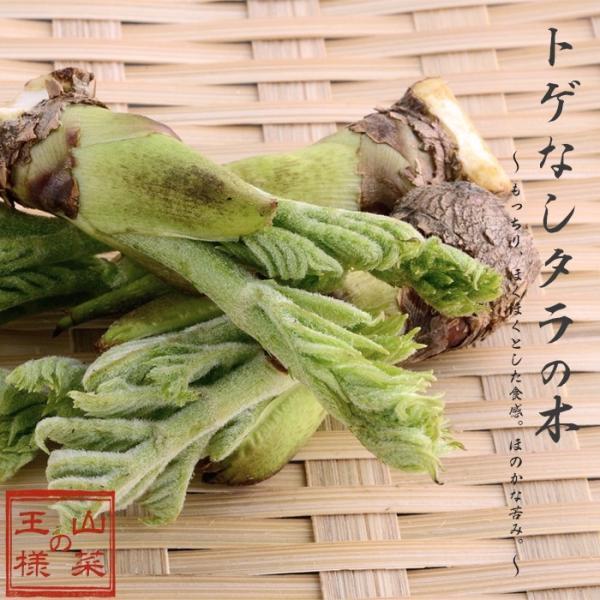 タラの木 トゲなし 苗木 挿し木 たらの芽 果樹 家庭樹 4.5号ポット 落葉樹 山菜