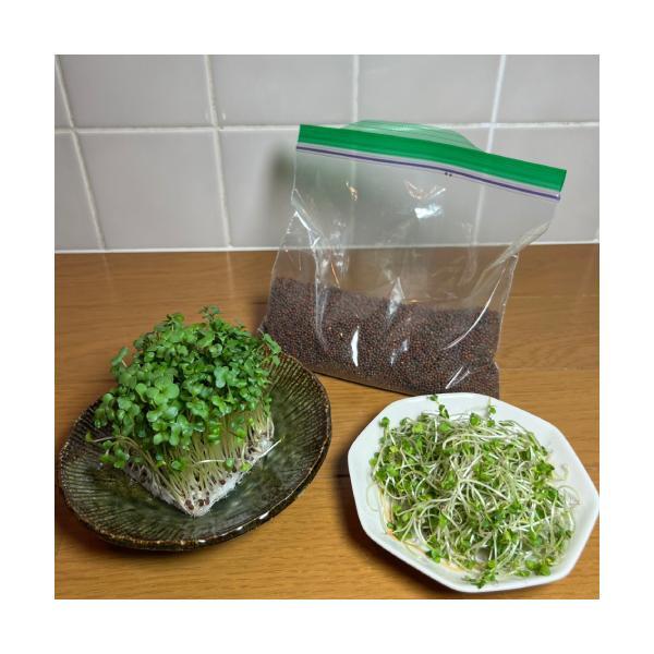 ブロッコリー(スプラウト)のタネ ミニパック ・業務用小分け 200ml 花粉症対策にもの画像