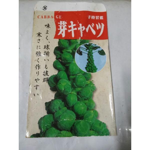 野菜苗 芽キャベツ 3号鉢  |hananakai