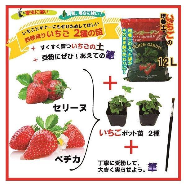 予約商品 送料無料 四季成りイチゴ栽培セット 苗と土と筆の3点セット イチゴ2種類 ガーデン培養土12L 受粉用の筆 10月中旬頃より順次発送|hananoyamato-online