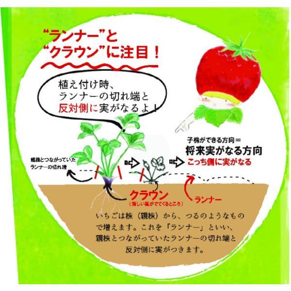 予約商品 送料無料 四季成りイチゴ栽培セット 苗と土と筆の3点セット イチゴ2種類 ガーデン培養土12L 受粉用の筆 10月中旬頃より順次発送|hananoyamato-online|09