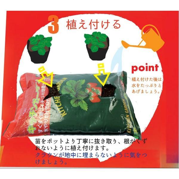 予約商品 送料無料 四季成りイチゴ栽培セット 苗と土と筆の3点セット イチゴ2種類 ガーデン培養土12L 受粉用の筆 10月中旬頃より順次発送|hananoyamato-online|10