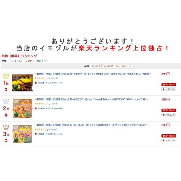 サツマイモ 苗 販売 「安納芋(イモヅル)10本  (※メール便不可)」トロ〜リ蜜あふれる話題の激うまイモ苗。(さつまいも・芋づる・安納イモ・案納芋|hanaururu|05