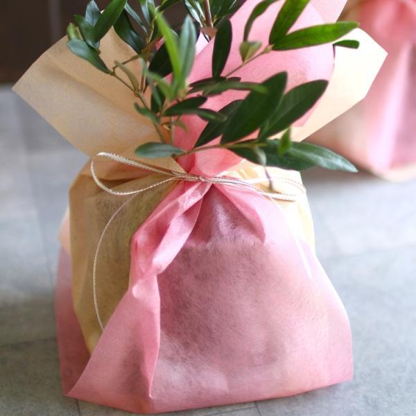 ミニオリーブ 「 オリーブの木 (高さ40〜45cm前後) 選べる鉢 2色 」 オリーブの木 販売 苗木 観葉植物 オリーブの木 鉢植え ガーデニング 農業 hanaururu 05