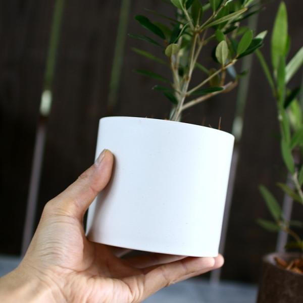 ミニオリーブ 「 オリーブの木 (高さ40〜45cm前後) 選べる鉢 2色 」 オリーブの木 販売 苗木 観葉植物 オリーブの木 鉢植え ガーデニング 農業 hanaururu 07