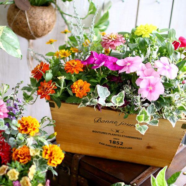 送料無料 ナチュラルな風合いのウッドプランターの寄せ植え 「花うるるおまかせアレンジinウッドBOX」(寄せ植え/夏/秋/玄関/誕生日プレゼント/新築祝いなど)|hanaururu