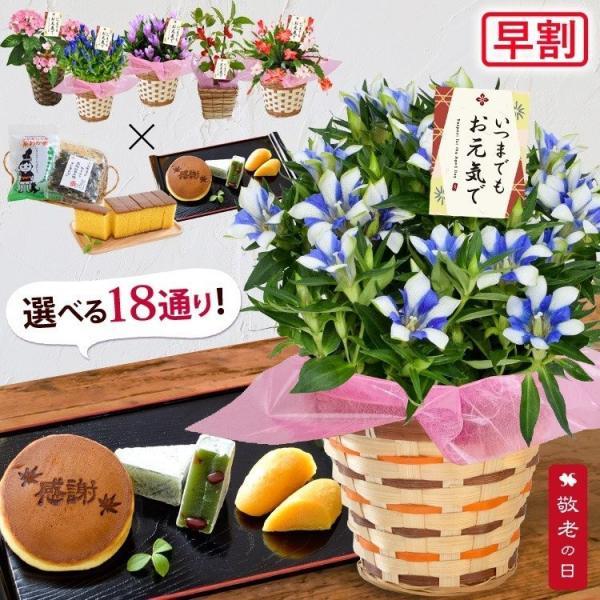 遅れてごめんね 敬老の日 花 プレゼント ギフト  敬老の日限定 選べる18撰 リンドウ りんどう 白寿 におい桜 など花&スイーツ4種から選べる贈り物|hanayoshi-y