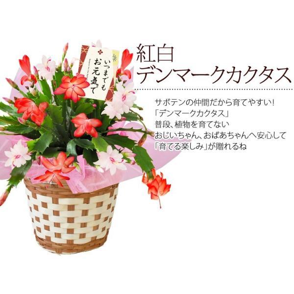 遅れてごめんね 敬老の日 花 プレゼント ギフト  敬老の日限定 選べる18撰 リンドウ りんどう 白寿 におい桜 など花&スイーツ4種から選べる贈り物|hanayoshi-y|05