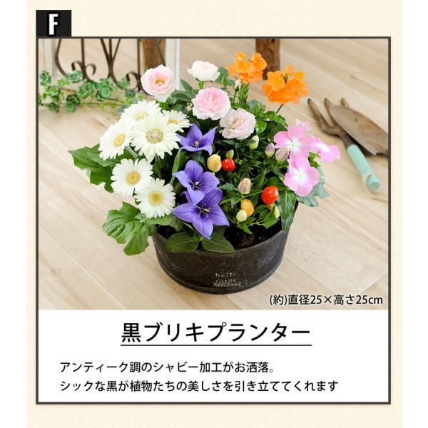 誕生日プレゼント ギフト 新築祝い 引っ越し祝い 贈り物 お祝い 花色とプランターが選べる 季節のおまかせカントリーガーデン 旬のお花をたっぷり|hanayoshi-y|09