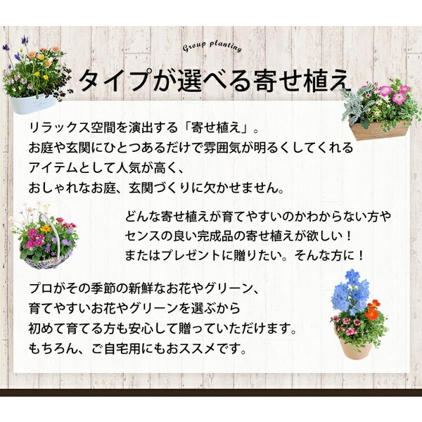 誕生日プレゼント ギフト 新築祝い 引っ越し祝い 贈り物 お祝い 花色とプランターが選べる 季節のおまかせカントリーガーデン 旬のお花をたっぷり|hanayoshi-y|03