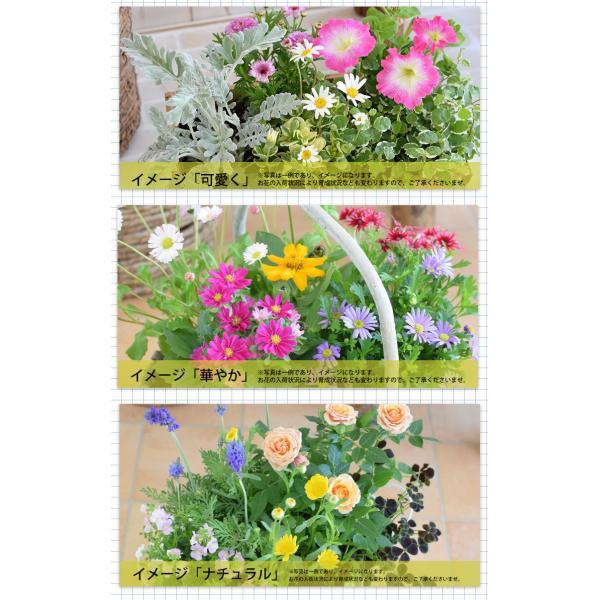 誕生日プレゼント ギフト 新築祝い 引っ越し祝い 贈り物 お祝い 花色とプランターが選べる 季節のおまかせカントリーガーデン 旬のお花をたっぷり|hanayoshi-y|04