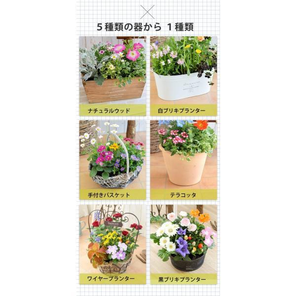 誕生日プレゼント ギフト 新築祝い 引っ越し祝い 贈り物 お祝い 花色とプランターが選べる 季節のおまかせカントリーガーデン 旬のお花をたっぷり|hanayoshi-y|05