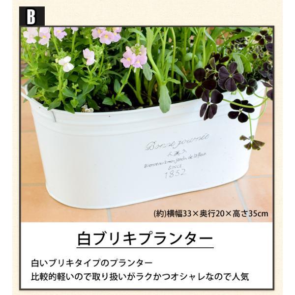 誕生日プレゼント ギフト 新築祝い 引っ越し祝い 贈り物 お祝い 花色とプランターが選べる 季節のおまかせカントリーガーデン 旬のお花をたっぷり|hanayoshi-y|06
