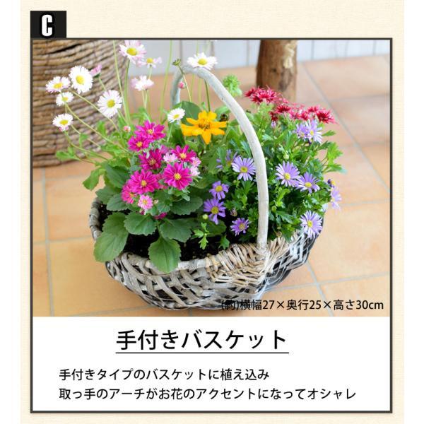 誕生日プレゼント ギフト 新築祝い 引っ越し祝い 贈り物 お祝い 花色とプランターが選べる 季節のおまかせカントリーガーデン 旬のお花をたっぷり|hanayoshi-y|07