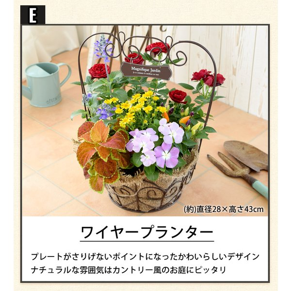 誕生日プレゼント ギフト 新築祝い 引っ越し祝い 贈り物 お祝い 花色とプランターが選べる 季節のおまかせカントリーガーデン 旬のお花をたっぷり|hanayoshi-y|08